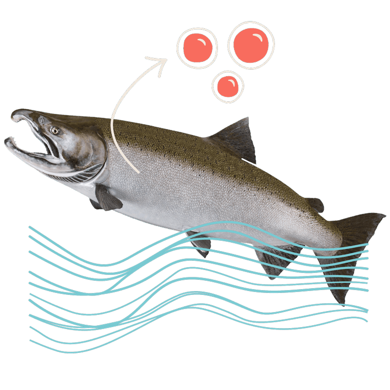 Rendering of a salmon and cells